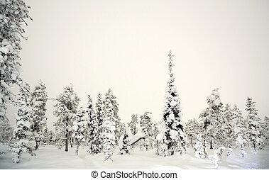 Forest Winter at night - Winter landscape at night in Kiruna...