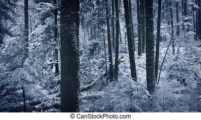 Forest Winter Scene With Snow Falling