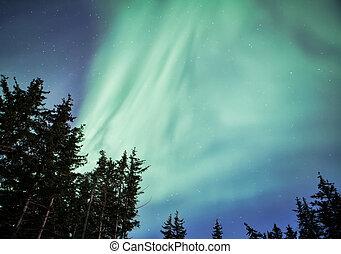 Forest with Aurora