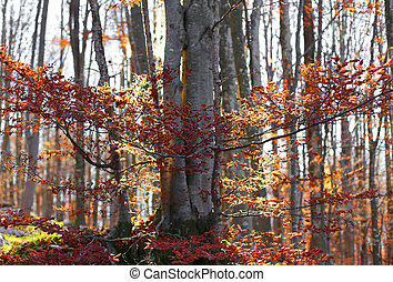 forest with colorful deciduous tree leaves in autumn
