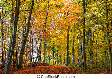Forest with colorful trees in the autumn