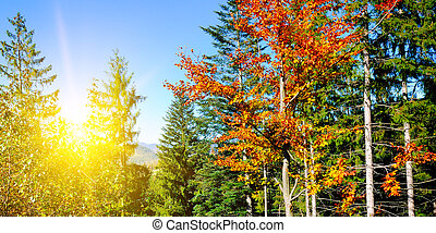 Forest with coniferous trees