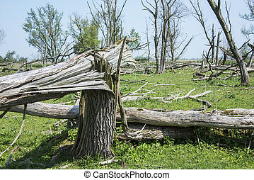 forest with dead and fallen trees after a storm