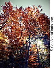 forest with deciduous tree - colorful deciduous tree leaves...