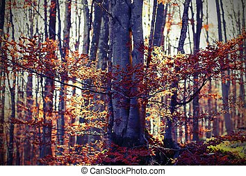 forest with deciduous tree leaves in autumn