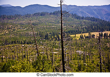 forest with fire damaged trees with black bark in the...