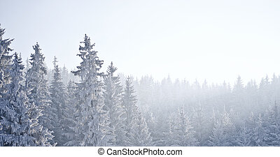 forest with frost - forest covered with frost during the ...