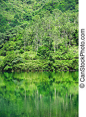 forest with lake