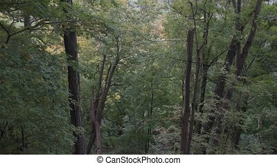 Forest with leaves starting to fall in early autumn. - Green...