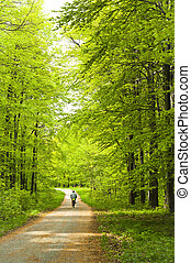 Forest with man on bicycle