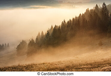 Forest with mist and sunlight, tree
