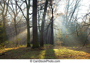 Forest with morning Fog.