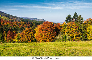 forest with red foliage on grassy hillside. beautiful...