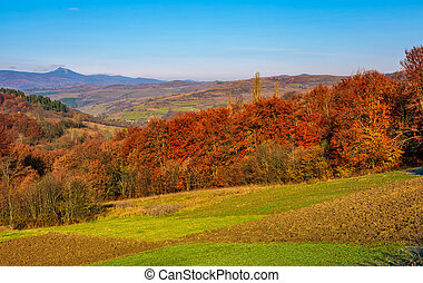 forest with red foliage on hills in countryside - forest...