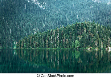 Forest with reflection in the water
