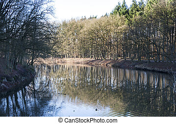 forest with reflection in water