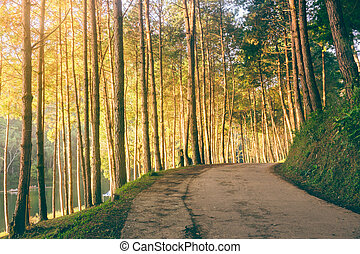 Forest with road  sunlight and shadows in sunrise