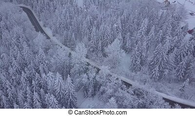 Forest with roadway in winter time - Aerial beautiful shot...