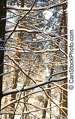forest with snowy branches in back light