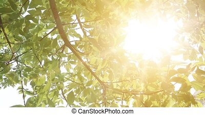 Summer in the forest, abstract natural backgrounds with fresh foliage and sun shining on background