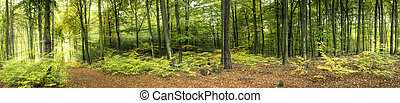 Forest with sun rays, panoramic