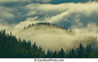 Forest with the conifer trees in mist