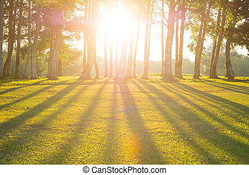 forest with the sun