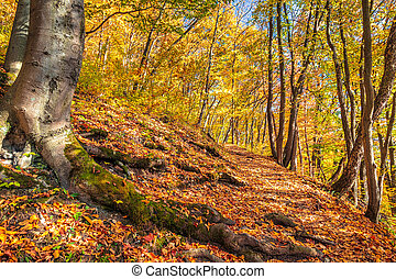 Forest with trees in autumn colors.