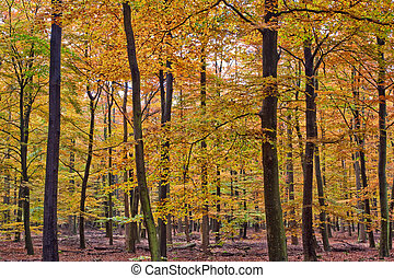 Forest with trees in autumn