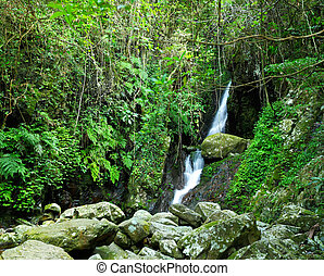 Forest with waterfall