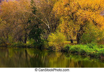 forest with yellow foliage near the river. gorgeous vivid...
