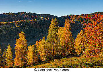 forest with yellow foliage on hillside. beautiful autumnal...