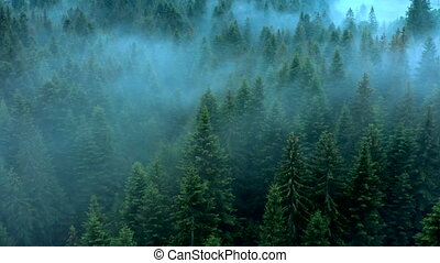 Forest wood fog nauture wild mist aerial mountains magic dark evening