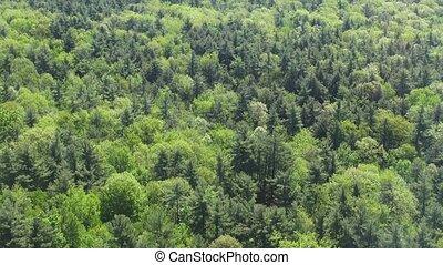 Forest, Woods, Trees, Foliage, Natu