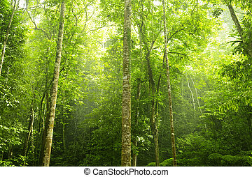 forest., zielony
