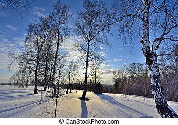 forest., zima krajinomalba