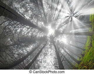 foresta, alba