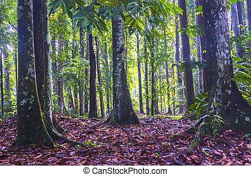 foresta, alberi., indietro, mattina, tropicale, nebbia, avventura, giungla