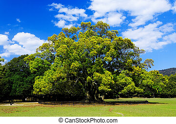 foresta, albero