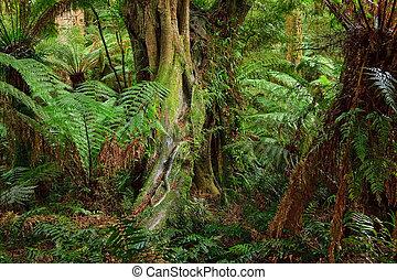 foresta, australia, pioggia