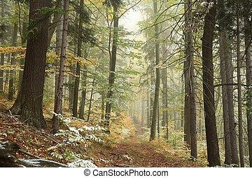 foresta autunno, in, il, nebbia