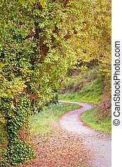 foresta autunno, sentiero, con, foglie, in, il, pavimento