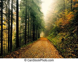 foresta autunno, strada