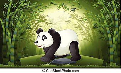 foresta bambù, panda