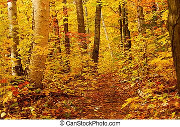 foresta, cadere