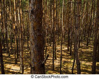 foresta densa, pino, depressione, vista elevata