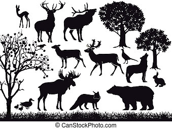 foresta, e, fauna