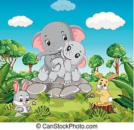foresta, elefante
