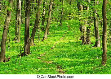 foresta, fondo, verde