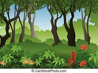 foresta, fondo